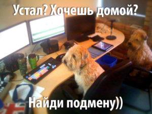 монтаж собачья работа