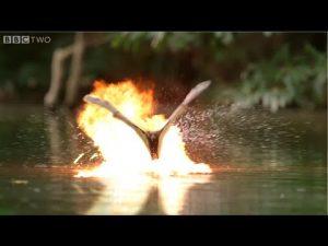 Видео: Если бы Майкл Бэй снимал документальные фильмы про животных
