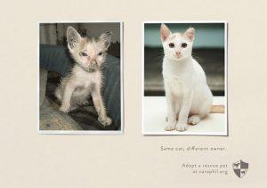17 мощных примеров социальной рекламы про животных