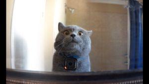 Видео: Что делает кот, когда его хозяина нет дома