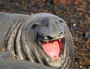 30 Фото веселых и нефотогеничных животных(Открытый список)