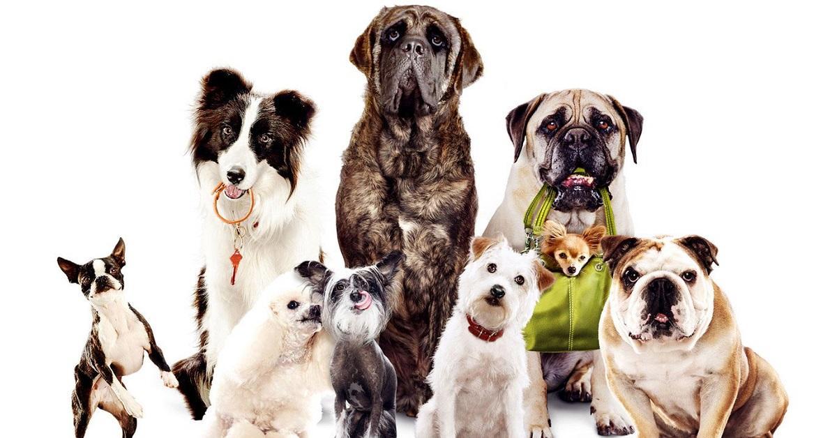 Ораза, открытки с днем рождения заводчице собак