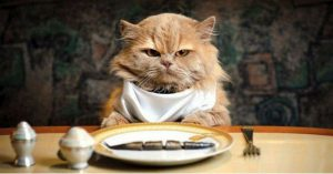 Тест: Проверь свои познания в кулинарии