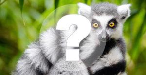 Тест на знание животного мира. Насколько вы опытный зоолог?