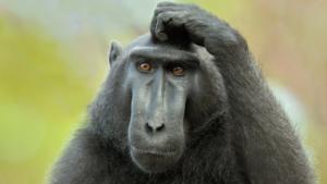 Тест для тех, кто думает, что знает о животных все