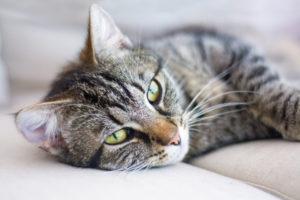Тест: Кем ваш кот был в прошлой жизни?
