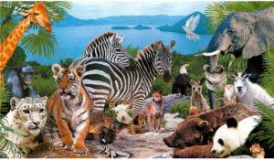 Тест: Сможете узнать этих 33 симпатичных животных?