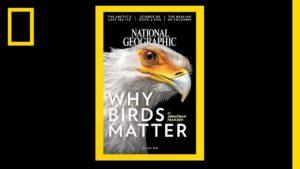 Видео: Эволюция обложек National Geographic за всю 130-летнюю историю издания.