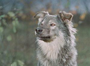 Тест по советским фильмам про животных