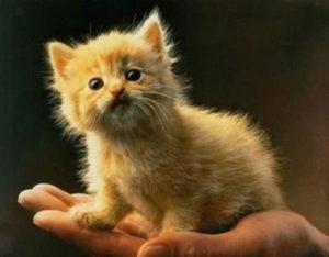 Тест: Угадайте детенышей животных по фотографиям!