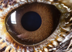 Тест: Угадай животное по макроснимку его глаза