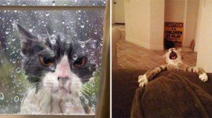 Эти фотографии доказывают, что кошки самые драматичные животные в мире.