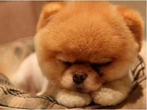 Тест: Угадай породу собаки по шерсти