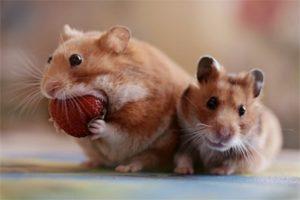 Какое вы животное в зависимости от ваших вкусовых предпочтений?