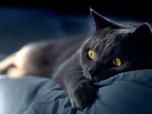 На какое животное вы похожи в постели?