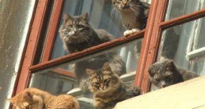 Какой ты мартовский кот?