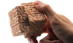 Тест: Всё ли вы знаете о мозге?
