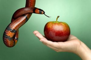 Шуточный гороскоп: Если бы знаки зодиака были фруктами
