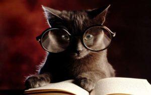Тест: Что вы знаете о кошках?