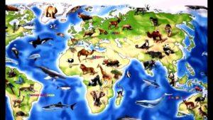 Тест для эрудитов: Жизнь на разных материках