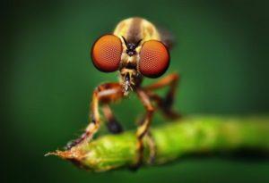 Тест: Что вы знаете о насекомых?
