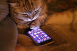 Тест: На какой телефон ты похож?