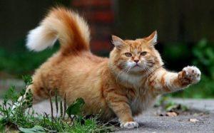 Тест: Это миф или правда о кошках?