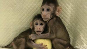 Тест: Отличишь выдумку от правды о клонировании?