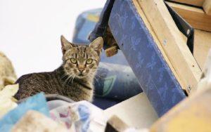 Экологический тест: Что вы знаете о мусоре?