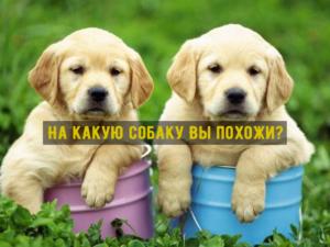 На какую собаку Вы похожи? Тест для любителей животных и психологии