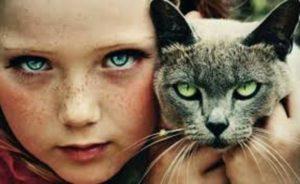 Ответьте на вопросы теста и узнайте, хороший ли вы хозяин для кошки?