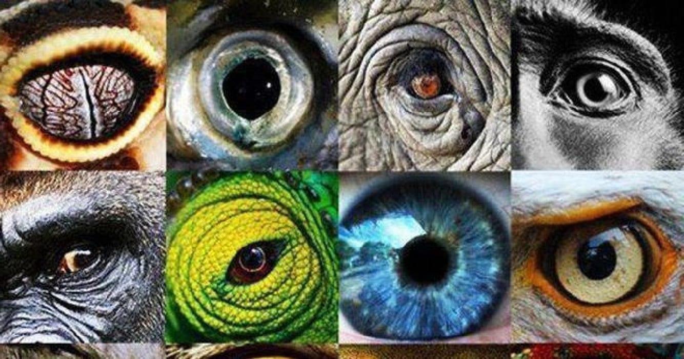 что видят животные картинки