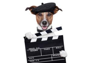 Только 1 из 10 настоящих любителей собак справится с этим тестом!