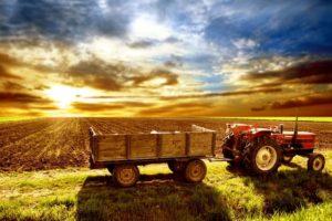 Тест: Какой из вас работник сельского хозяйства?