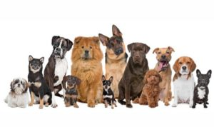 Тест: Хорошо ли ты знаешь породы собак?