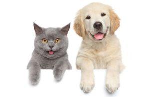 Тест: В вас больше кота или собаки?