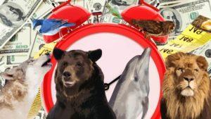 Тест: Вы волк, медведь, дельфин или лев? Ответьте на 8 вопросов и узнайте свой хронотип
