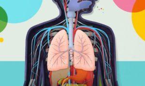 Тест по анатомии: Что ты знаешь о своем теле?