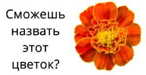 Тест: Сможешь угадать цветок по фото?