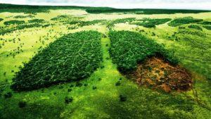 Тест: Что вы знаете о проблемах экологии