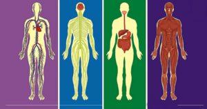 Только 13% мужчин сможет пройти этот тест на знание анатомии