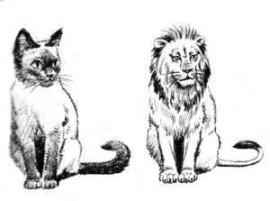 Тест: Дух какого животного в тебе поселился?