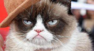 Тест: Кто ты из знаменитых котов?