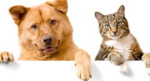 Кто ты по характеру: Котик или пес?
