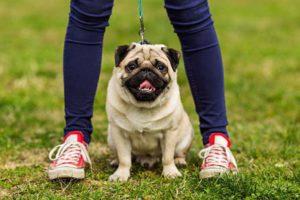 Тест: На какую собаку вы похожи, когда злитесь?