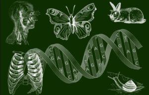Тест: Проверь как  хорошо ты знаешь биологию