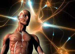 Как хорошо ты знаешь свой организм? Тест по школьной программе