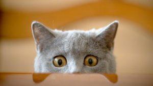 Тест про котиков