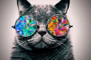 Тест на внимательность: Найдешь котика?