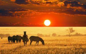 Тест: Сможете ли выжить в Африке?